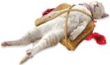 Los gatos y las tostadas conmermelada